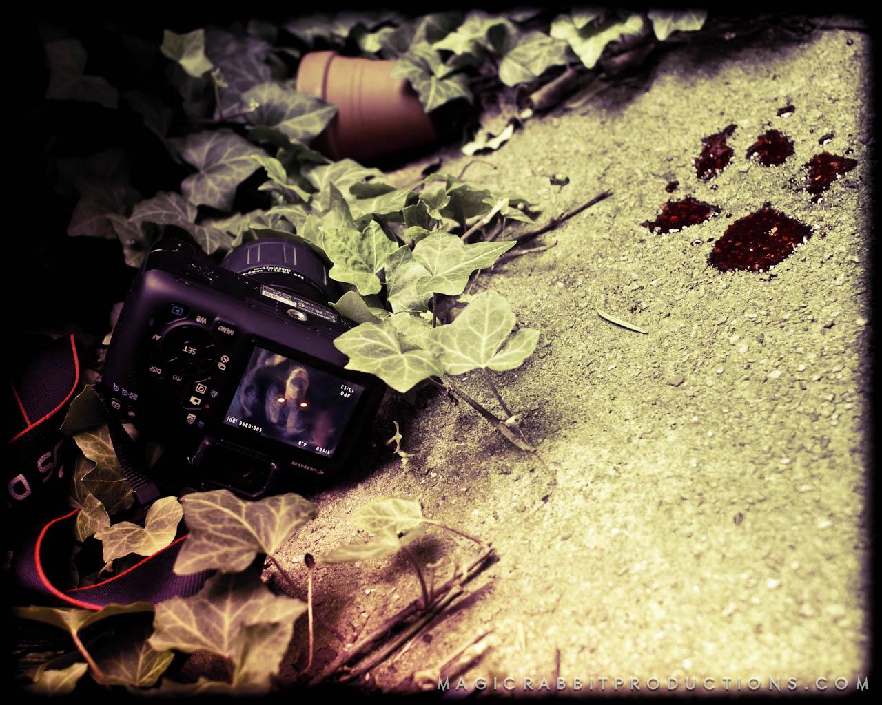 sun dog halloween